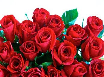 Rose di San Valentino a domicilio o in hotel